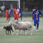 PHOTO: Sheep invade pitch during NC Special Competition match between Liberty Professionals and Ebusua Dwarfs