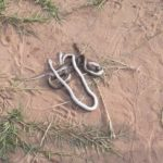 Carl Reindorf Park unsafe to host Premier League matches after fans kill three snakes during Liberty-Hearts clash